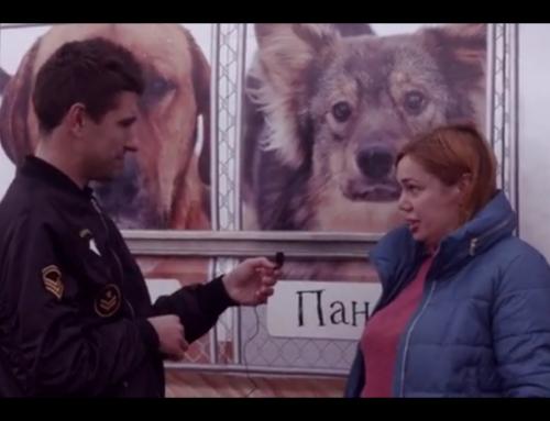 Интервью с руководителем приюта для животных ТиНАО Дворяне Ириной Тиховской